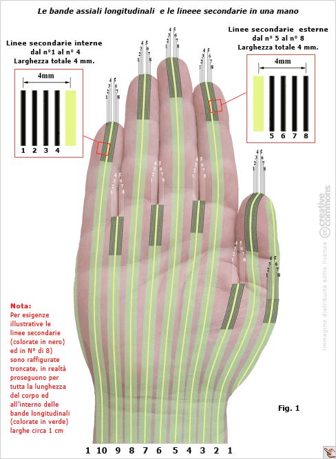 Le catene lineari di calligaris e il cleanergy il blog for Calligaris giuseppe